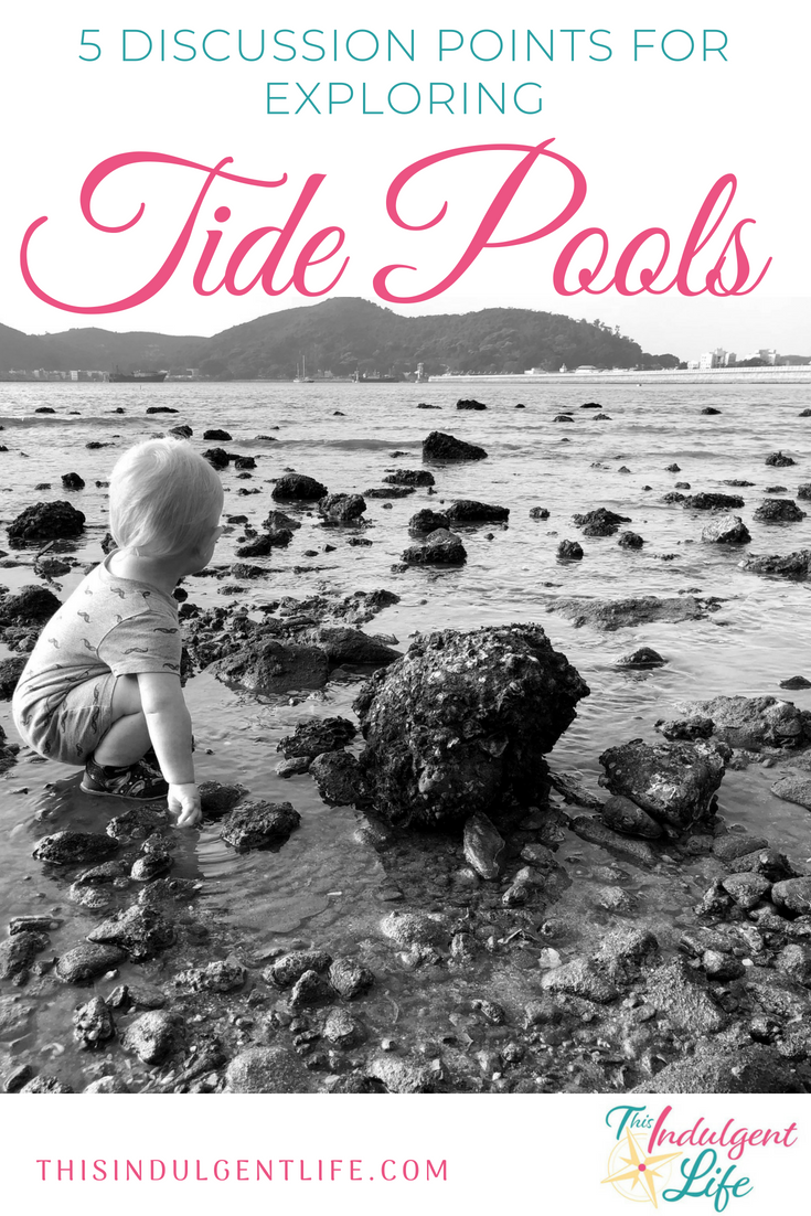 5 Discussion Points for Exploring Tide Pools | This Indulgent Life | Will you be exploring the coast and some tide pools soon? Read these tips for encouraging discussion with your kids. | #criticalthinking #tidepools #oceanlife #homeschooling #unschooling #roadschooling #sealife #learning