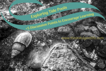 tide pools | questions to ask yourself when studying tide pools | tide pools | Hong Kong | children science | teaching resources | Homeschooling | Unschooling | sealife science lessons | This Indulgent Life
