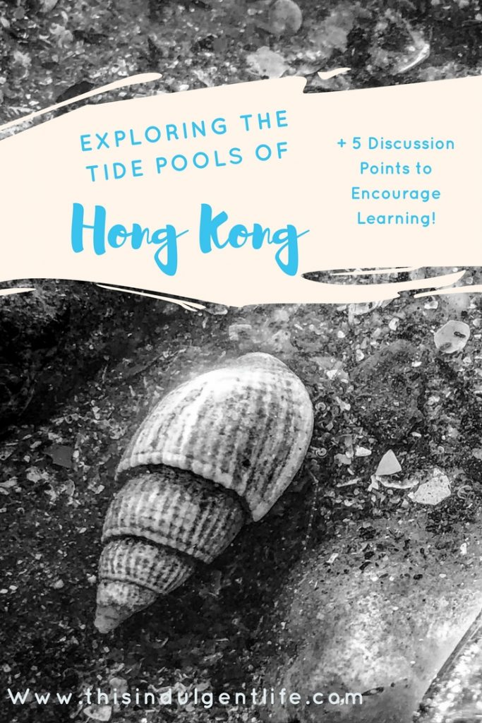 questions to ask yourself when studying tide pools | This Indulgent Life| Want to encourage a love of science and the ocean? Take a look at this toddler's exploration of the tide pools in Hong Kong! | #tide pools #Hong Kong #children #science #teachingresources #Homeschooling #Unschooling #sealife #sciencelessons