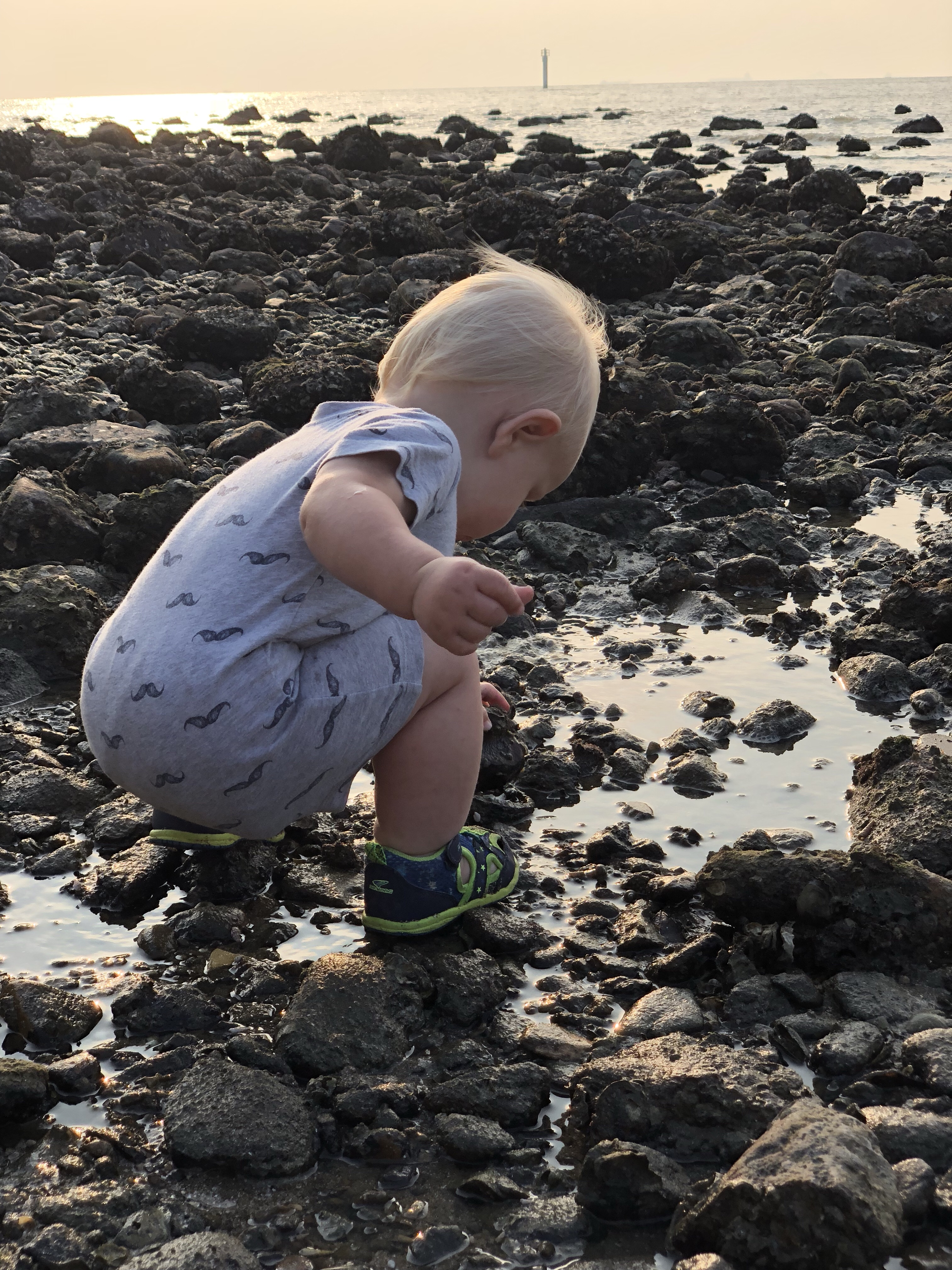 questions to ask yourself when studying tide pools | tide pools | Hong Kong | children science | teaching resources | Homeschooling | Unschooling | sealife science lessons | This Indulgent Life