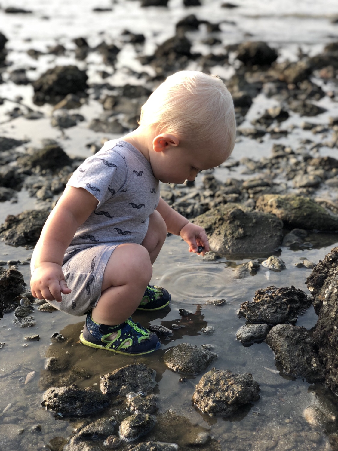 toddler explores tide pools | questions to ask yourself when studying tide pools | tide pools | Hong Kong | children science | teaching resources | Homeschooling | Unschooling | sealife science lessons | This Indulgent Life