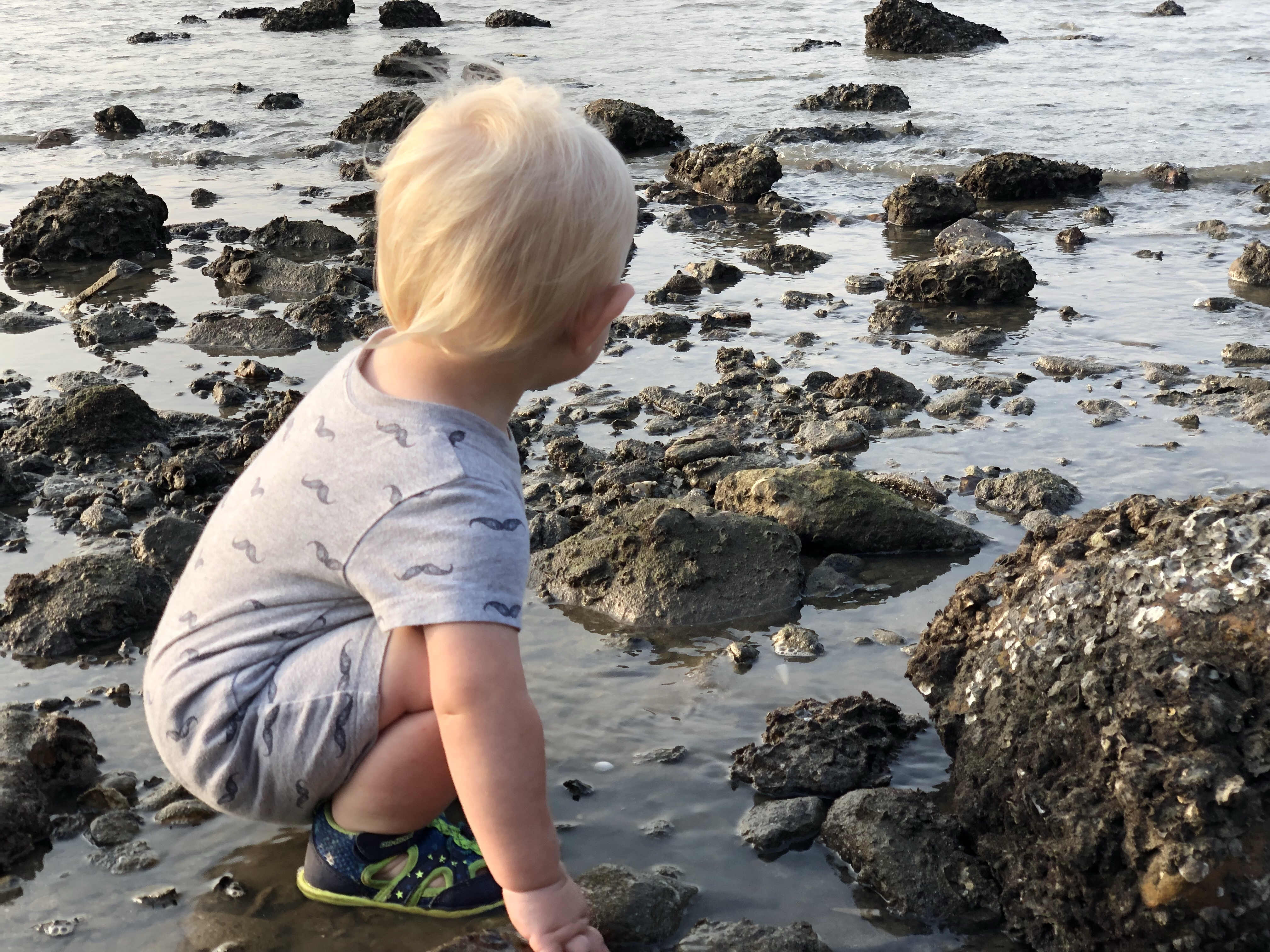 explore tide pools | questions to ask yourself when studying tide pools | tide pools | Hong Kong | children science | teaching resources | Homeschooling | Unschooling | sealife science lessons | This Indulgent Life