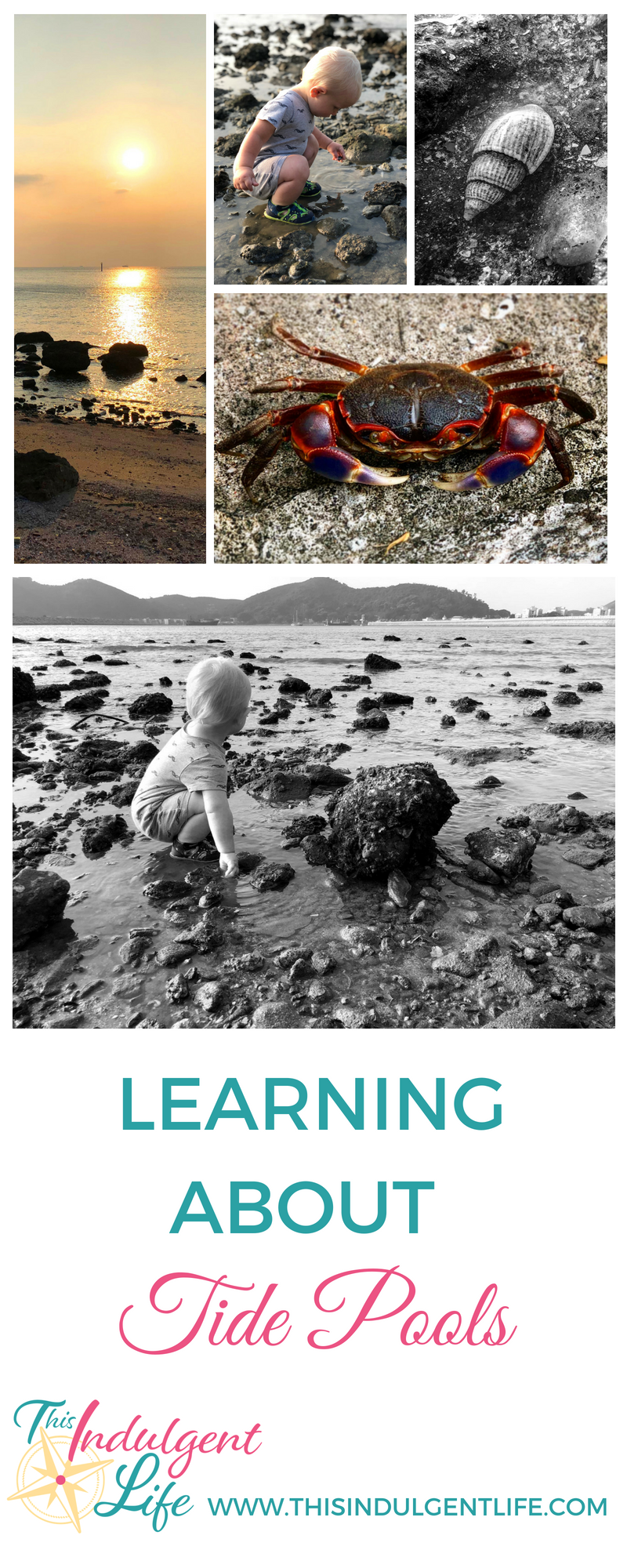 Learning About Tide Pools | This Indulgent Life | Follow along as we explore the life inside tide pools. | #toddlerlife #nature #naturewalk #criticalthinking #tidepools #oceanlife #homeschooling #unschooling #roadschooling #sealife #learning