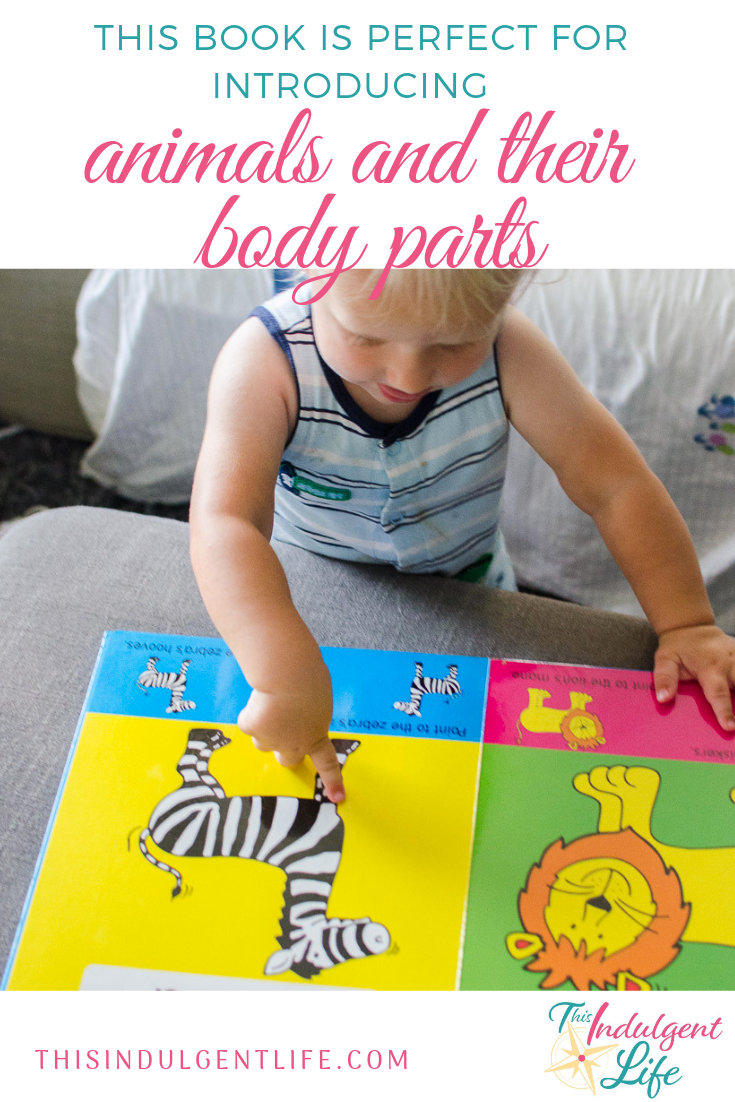 This Book is Perfect for Introducing Animals and Their Body Parts | This Indulgent Life | Baby's First Animal Book is a brightly colored book that introduces many common animals and then gets the toddler to interact by pointing to various body parts. | #vocabularyfortoddlers #earlyreaders #animalbooks #booksfortoddlers #booksforbabies #interactivebooks