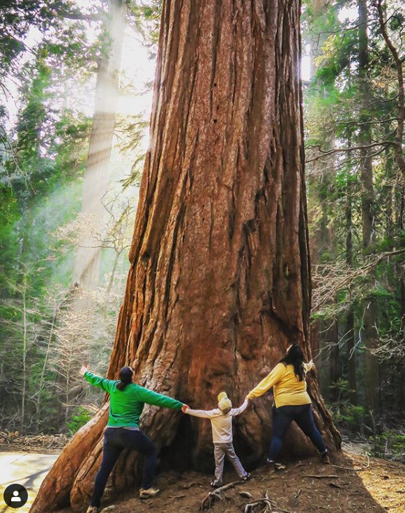 The Wandermires, hand-in-hand around a large redwood.